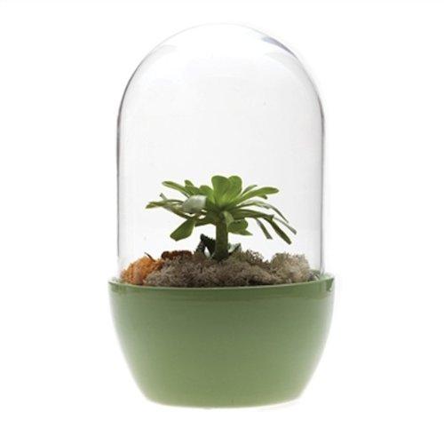 101 Gifts Pill Terrarium